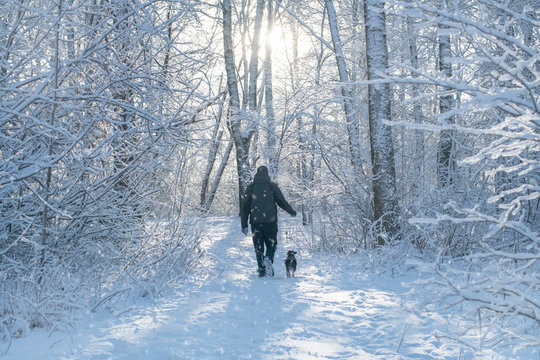 A man in a black tracksuit has a walk with a Boston Terrier dog in a winter snow-covered forest on a leash. people from behind.