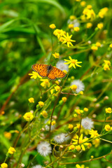 Fond de hotte en verre imprimé Papillon Closeup beautiful butterflies sitting on the flower.