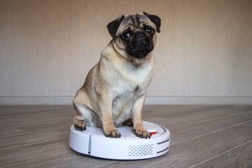 A pet pug is sitting on a white robot vacuum cleaner and controls the quality of cleaning