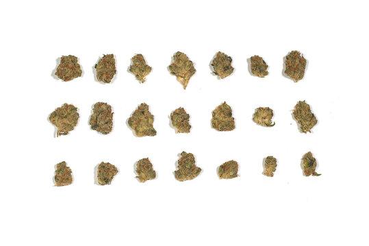 Dried marijuana cannabis pot weed 3 rows of 7 buds nugs flowers  isolated on white