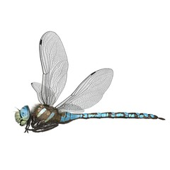 3d rendered paddle tailed darner dragonfly isolated on white background
