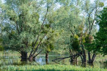 Photo sur Toile Olive paysage au lac du Der