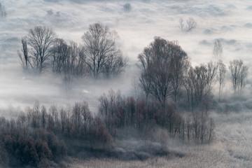 Zimowy krajobraz, mglisty las rano - 313049731