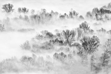 Drzewa we mgle o wschodzie słońca - 313049989