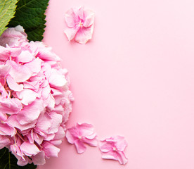 Pink hydrangea flowers on pink background