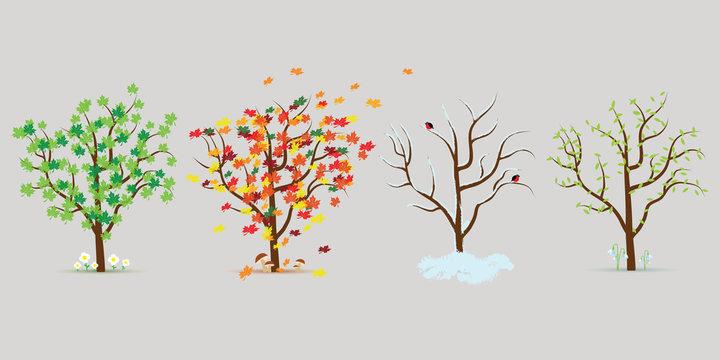 Vector set of four seasons trees. Flat design