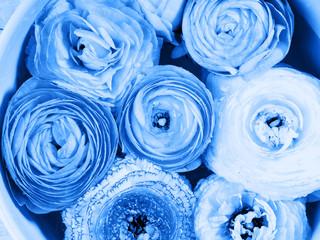 Beautiful ranunculus closeup detail background. Woman mother's day wedding invitation. Holiday elegant flower arrangement. Classic blue color of 2020 tone