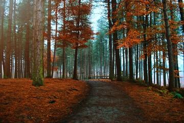 Printed roller blinds Beige road in forest