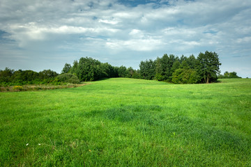 Green meadow with forest, view on a sunny day Fotobehang