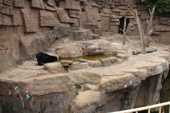 bear in a zoo in osaka (japan)