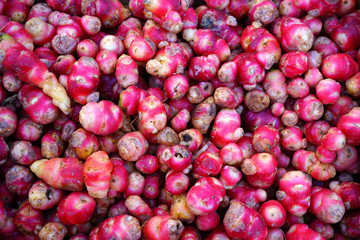 Colorful red and yellow roots of oca tuber from Peru (Oxalis tuberosa) at a French farmers market