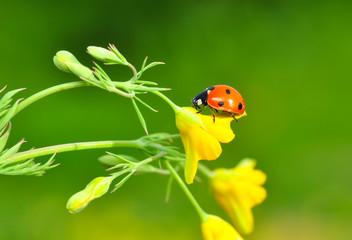 Garden Poster Butterfly Beautiful ladybug on leaf defocused background