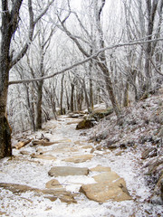 Winter Hiking Trail