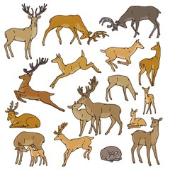 Wild deer herd vector set males and females with babies jump, sleep and in other poses. Outline sketch illustration isolated on white background.