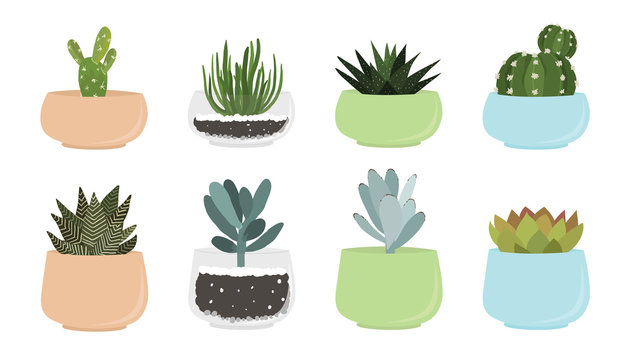 Various succulent and cacti in pots, vector drawing