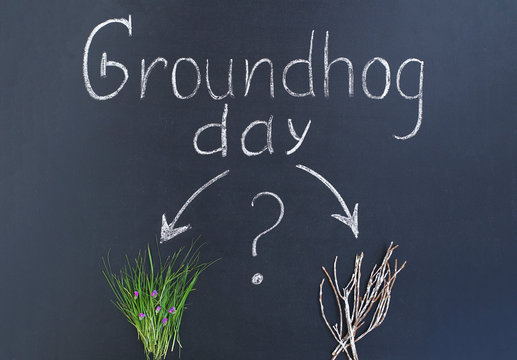 Flat lay: groundhog day text written in chalk on a school blackboard. A bunch of green grass with purple flowers and dry old snowy branches, a big question mark with arrows.