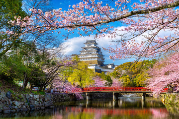 Photo sur cadre textile Gris traffic Cherry blossoms and castle in Himeji, Japan.