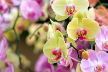 Tuinposter Orchidee colorful orchid flower garden - orchid flowers