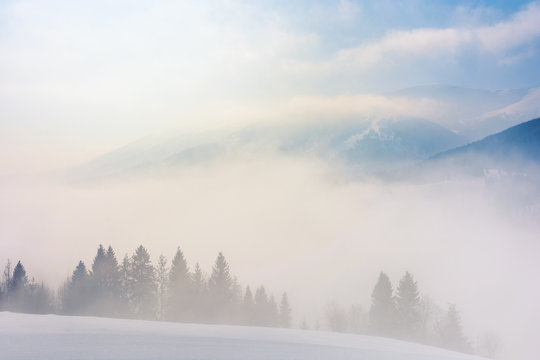 blizzard in mountains. magic scenery with clouds and fog on a sunny winter morning. trees in mist on a snow covered meadow. borzhava ridge in the distance. cold weather forecast concept