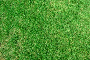 Papiers peints Herbe Green grass texture background, Green lawn, Backyard for background, Grass texture, Park lawn texture.