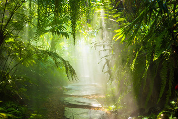 The fog in the rain forest and sun ray.