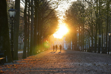 Sunset Tree Path, Lange Voorhout, The Hague, Netherlands Wall mural