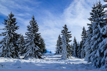 Printed kitchen splashbacks Light blue Winter landscapes from Vitosha mountain, Bulgaria
