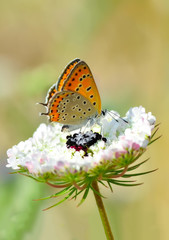 Foto op Aluminium Vlinder Closeup beautiful butterfly sitting on the flower.