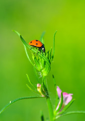 Printed roller blinds Butterfly Beautiful ladybug on leaf defocused background