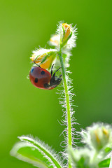 Foto auf Leinwand Schmetterling Beautiful ladybug on leaf defocused background