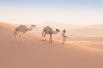 Tuinposter Kameel Bedouin and camel on way through sandy desert Nomad leads a camel Caravan in the Sahara during a sand storm in Morocco Desert with camel and nomads Silhouette man Picturesque background nature concept