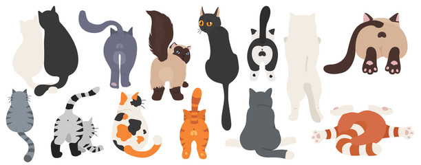 Cats poses behind. Cat`s butts. Flat design clipart