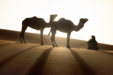 Bedouin and camel on way through sandy desert Nomad leads a camel Caravan in the Sahara during a sand storm in Morocco Desert with camel and nomads Silhouette man Picturesque background nature concept