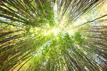 foret de bambou en chine