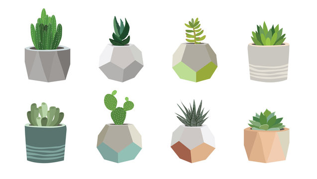Small succulent and cacti plants in pots, vector illustration
