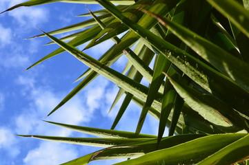 Door stickers Palm tree planta verde