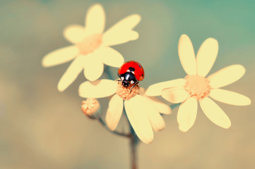 Foto op Aluminium Vlinder Beautiful ladybug on leaf defocused background