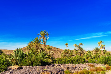 Foto op Plexiglas Donkerblauw landscape Draa valley oasis, Morocco. Copy space for text.
