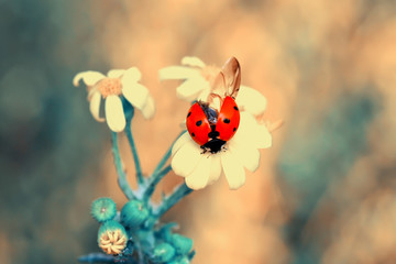 Papiers peints Papillon Beautiful ladybug on leaf defocused background