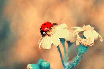 Foto auf Acrylglas Schmetterling Beautiful ladybug on leaf defocused background