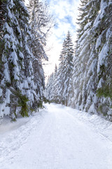 Wintry path in the forest with lots of snow