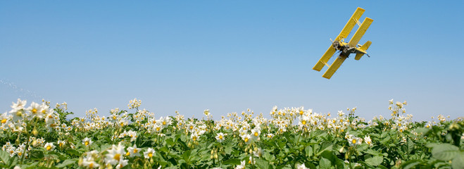 A crop duster spray airplane over a blooming potato field.