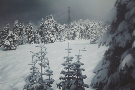 winter mountain landscape with trees and mountains