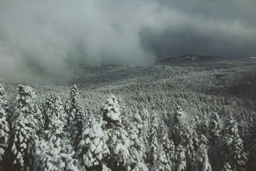 Steamy fog on the snowy forest of Uludag mountain
