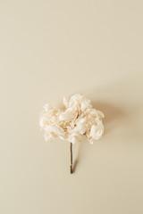 Deurstickers Hydrangea White hydrangea flower branch on pastel beige background. Flat lay, top view minimal floral card.