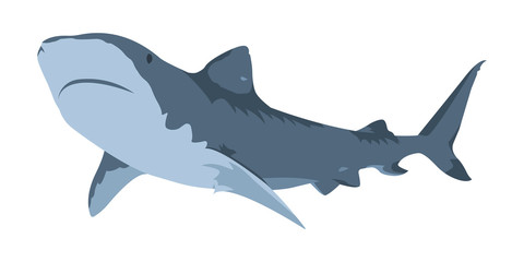 Shark Icon. Minimalistic performance. Isolated vector illustration on a white background