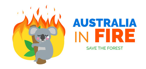 australia in fire koala bear on the tree ecology catastrophe banner design