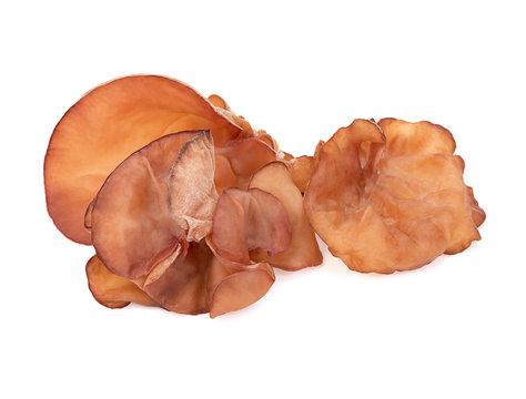 ear mushroom isolated on white background