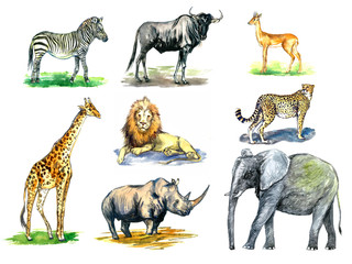 Wild African animals collection, zebra, Wildebeest, Oribi antelope, girafe, lion, rhinoceros, cheetah, elephant, hand painted watercolor illustration design element for card, print, posters, patterns