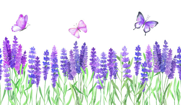Watercolor illustration with lavender flowers and butterflies.